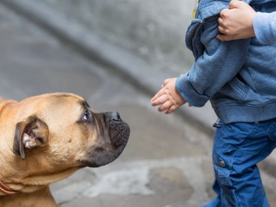 Use These 12 Tips to Prevent Fear Aggression in Dogs