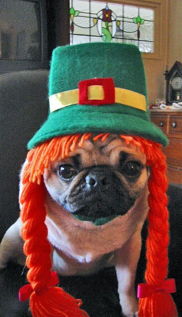 Grasp the Wonderful Funny Dog Leprechaun Pictures