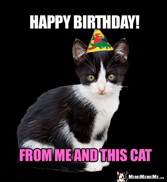 Grasp the Wonderful Funny Happy Birthday Cat Memes