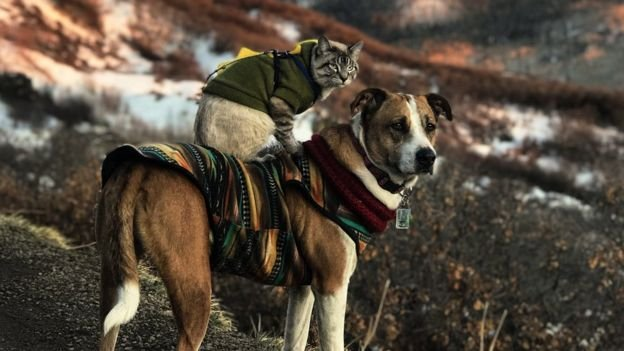 Dog stands on top of hilly landscape with cat on top of him