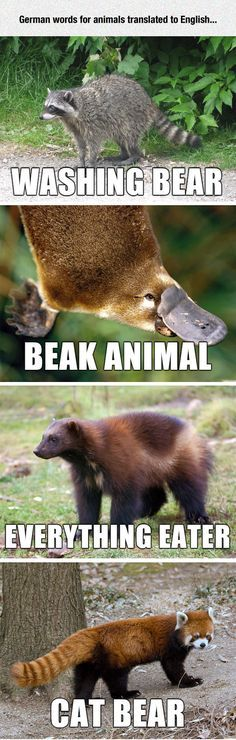 Some Literal Translations Funny Animal NamesHilarious
