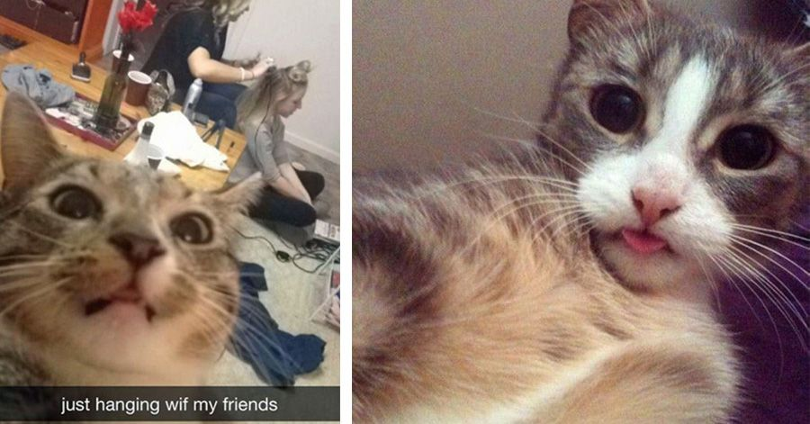 The 24 Funniest s Cats Taking Selfies 5 Really Made My Day LOL