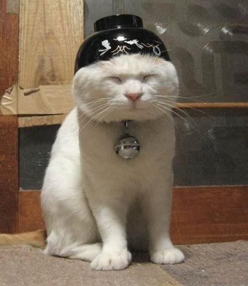 Clean Funny Cat Cats