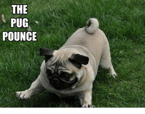 Memes Pugs and 🤖 THE PUG POUNCE