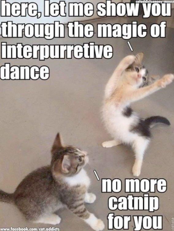 Cute Cats Good Night Cute Cats Reddit Funny Animal Memes Cute Funny Animals