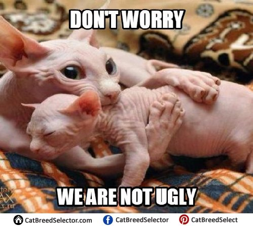 Funny Hairless Cat Memes