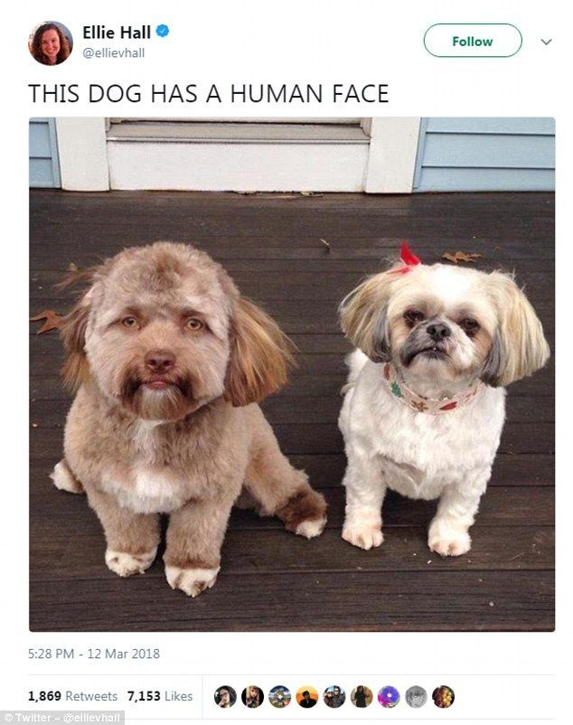 Dog with VERY human face goes viral & he looks like Jake Gyllenhaal funny Pinterest