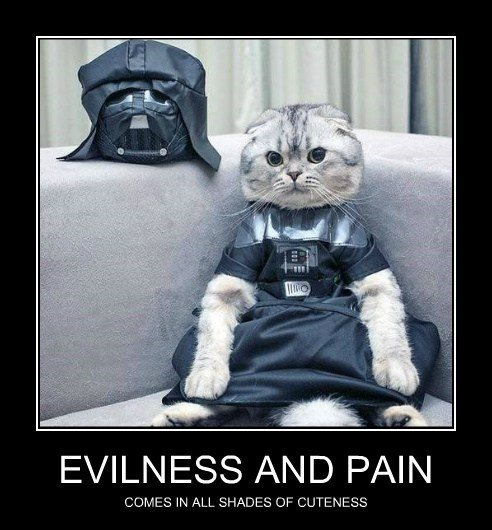 star wars cuteness dark side cats