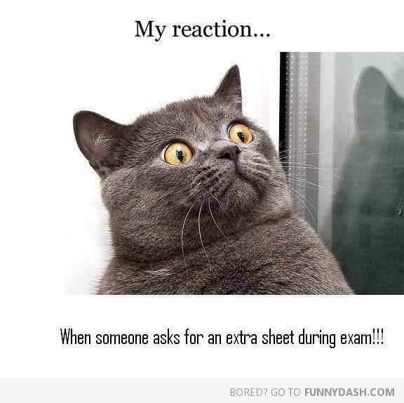 Funny Cat Memes Funny Captions Funny Quotes