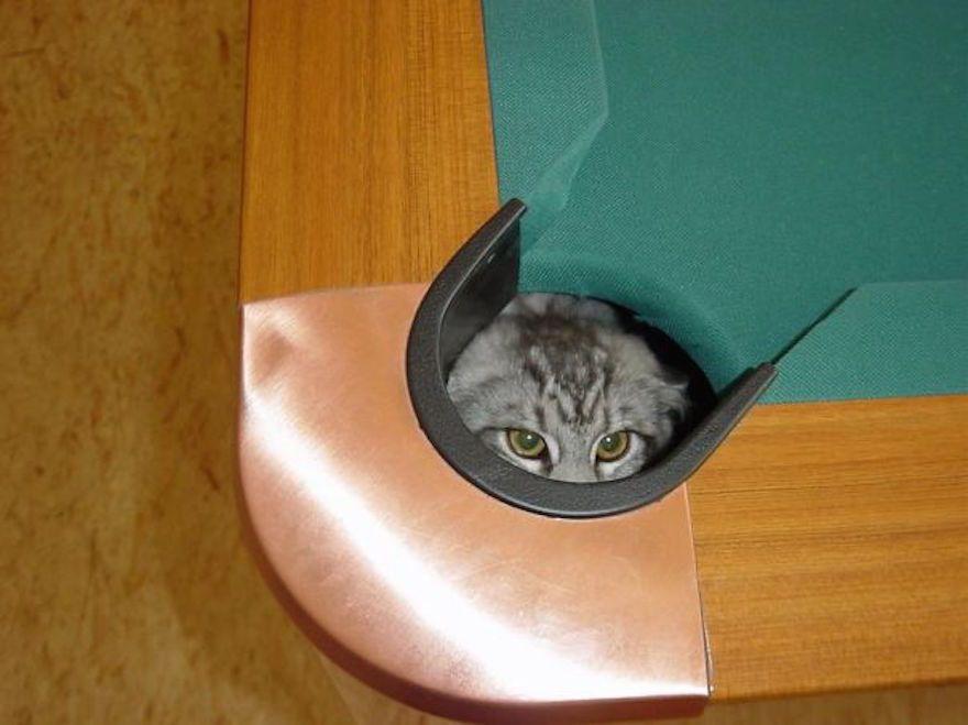 ninja cat hiding funny 17 605