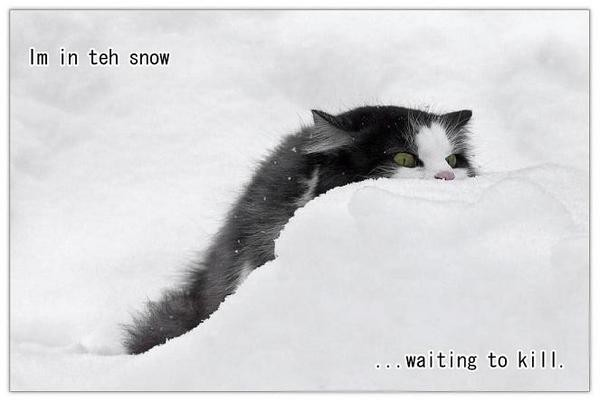 IM In Teh Snow Cat Meme