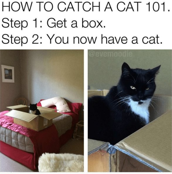 Cat meme of how to catch a cat using a box