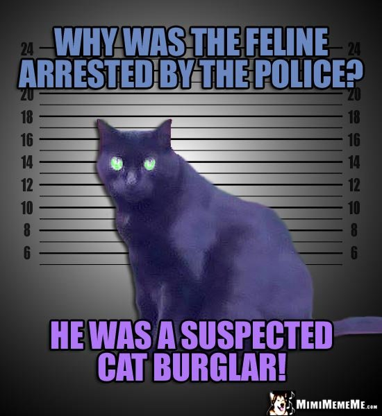 Mugshot Cat Joke Why was the feline arrested by the police He was a