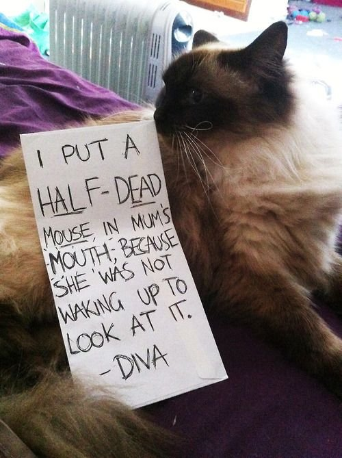 Except that cats can never feel remorse Heartless beasts Funny Cat Funny