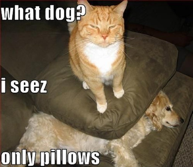 See the Beautiful Funny Dog Cat Dog Memes