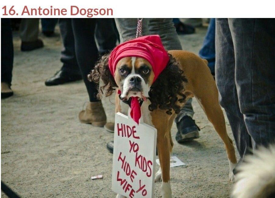 Antoine Dogson Pet Halloween Costumes Dog Halloween Animal Costumes Funny Dog Costumes