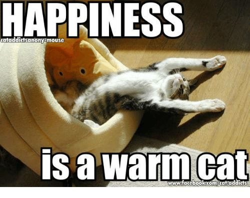 Memes Happiness and 🤖 HAPPINESS cataddictsanonyEmouse Is a warm cat
