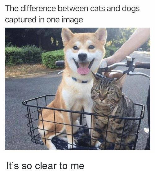 Cats Dogs and Funny The difference between cats and dogs captured in one