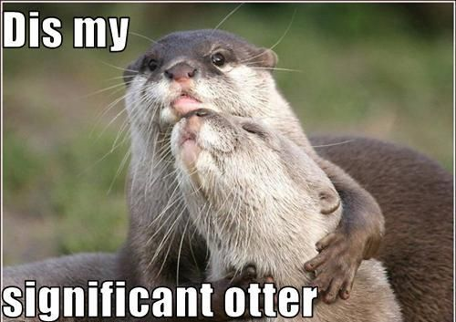 Otters are my homies Baby Animals Cute Animals Funny Animals Wild Animals