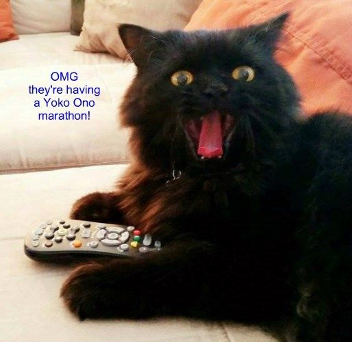 caption Cats