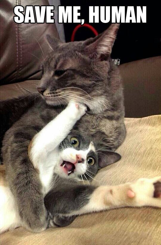 See the Best Of Funny Cat Pictures Hugs
