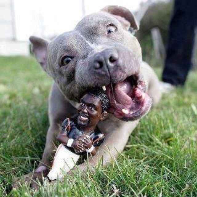 Michael Vick Chew Toy It s despicable the Philadelphia Eagles hired dog abuser Michael Vick as a quarterback I m ting this Michael Vick chew dog for