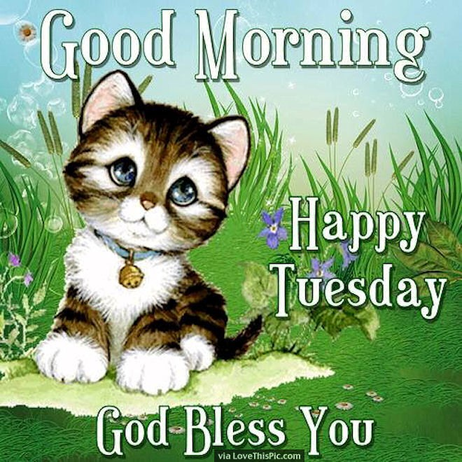Good Morning Happy Tuesday God Bless You Cute Quotes
