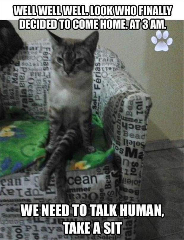 Funny Cat with Captions 26