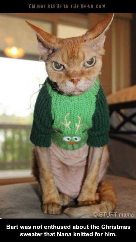 Not Happy With His Ugly Christmas Sweater 45 Absolutely Hilarious of Animals to Make You Laugh