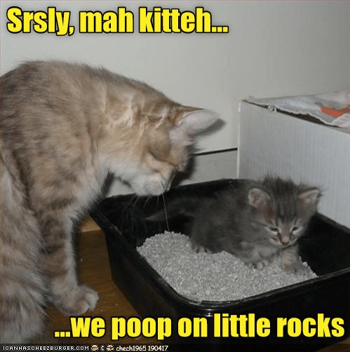 funny meme of a cat teaching the kitten the harsh realities of being a house cat