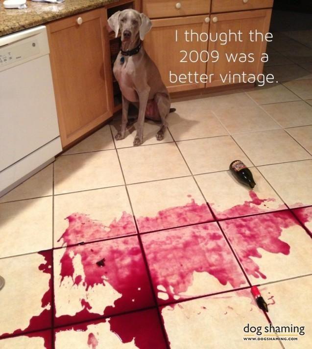 0df4380df02eb10c612ee red wines wine bottles