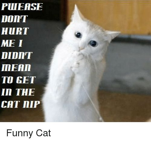 Cats Funny and Mean PULIEASE Don HURT ME I DIDIIT MEAn TO GET