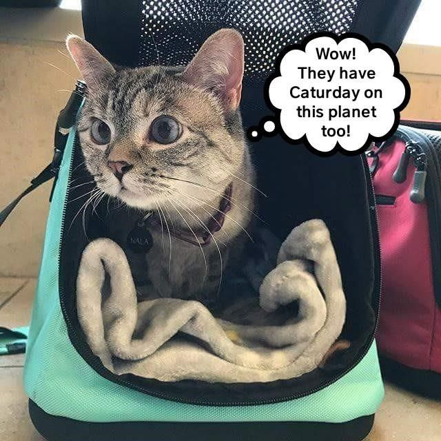 Cat meme of kitty ing out a travel bad with a shocked look that they also