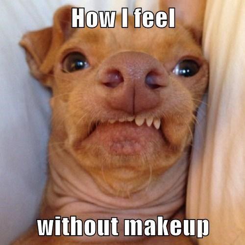 Ugly Dog Meme Funny Quotes Memes Jokes