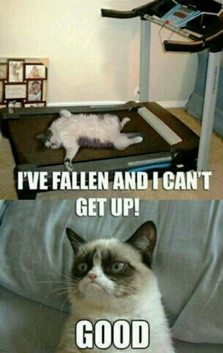 I laughed so hard milk came out of my nose BWAAHHAHAHAHAHAHA Grumpy Cat