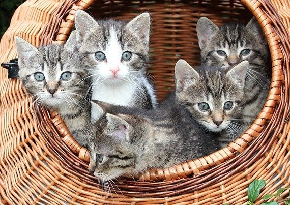 See the Fascinating Funny Cat Kitten Pictures