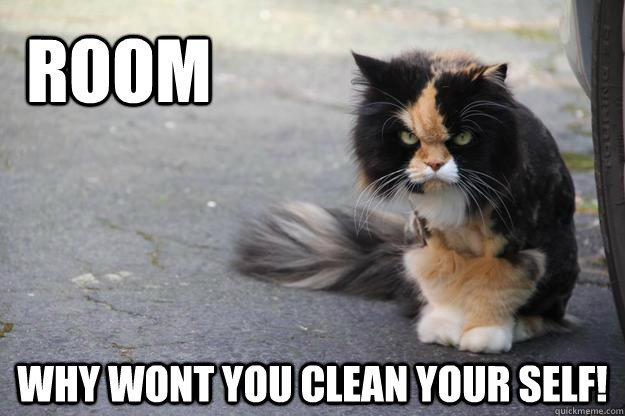 ROOM Why wont you clean your self Angry Cat
