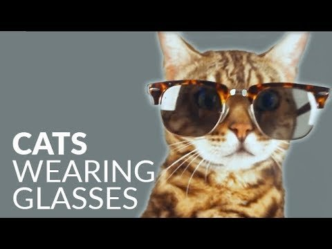 Cute cats wearing glasses funny cat video