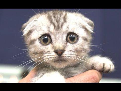 Cute Cats A Cute Cat Videos pilation 2015