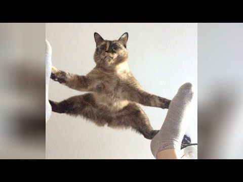 It s TIME for SUPER LAUGH – Best FUNNY CAT videos