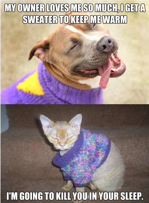 Cat is jealous of Dog