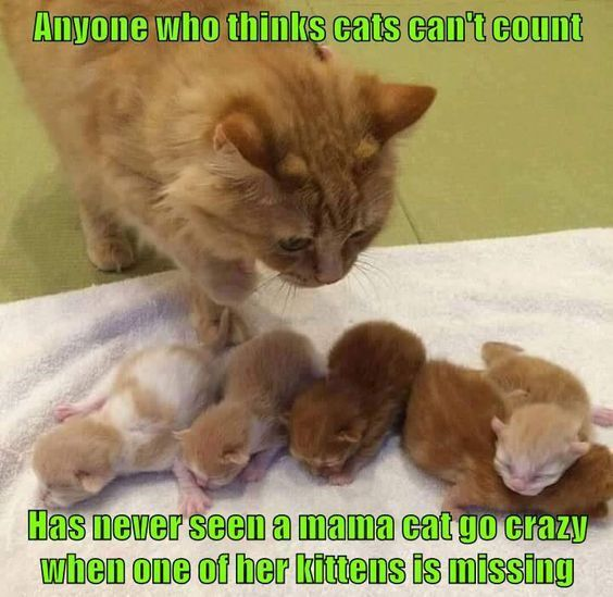 catsmemes funny animal pictures cat memes just like cat funniest animals cat fun cat funny cat cats cat cute cat stuff funny funnyanimals