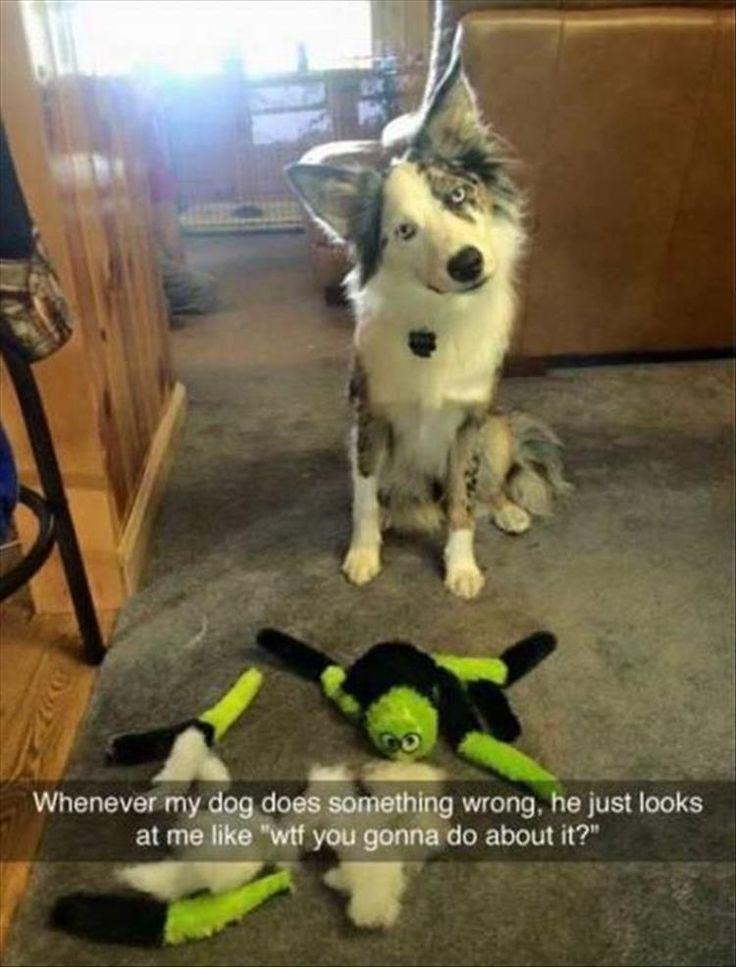 nice Funny Animal The Day – 17 Pics Daily Lol Pics