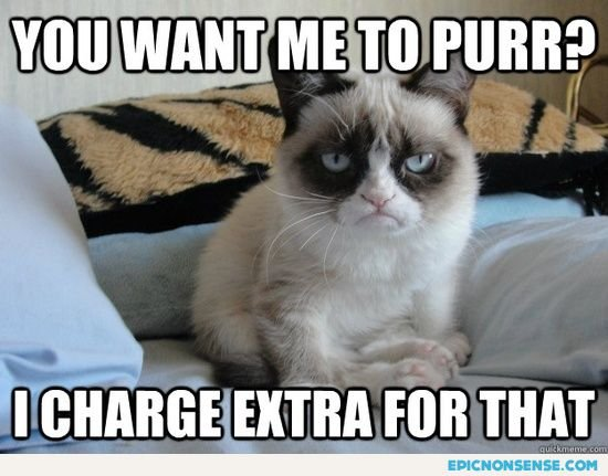 Funny Cats Top 49 Most Funniest Grumpy Cat Quotes 21