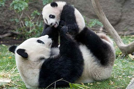Stop It 18 Annoyingly Cute Baby Animals Misbehaving