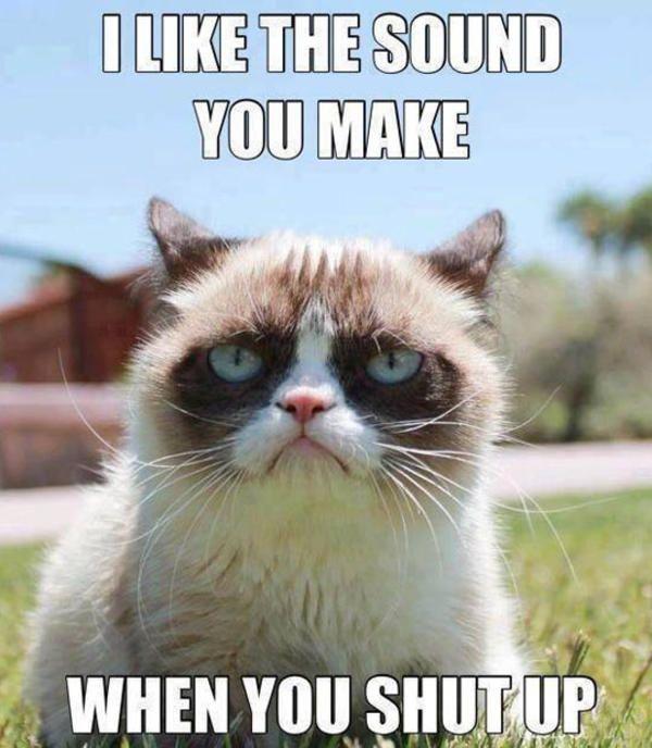Funny Cat Memes 295