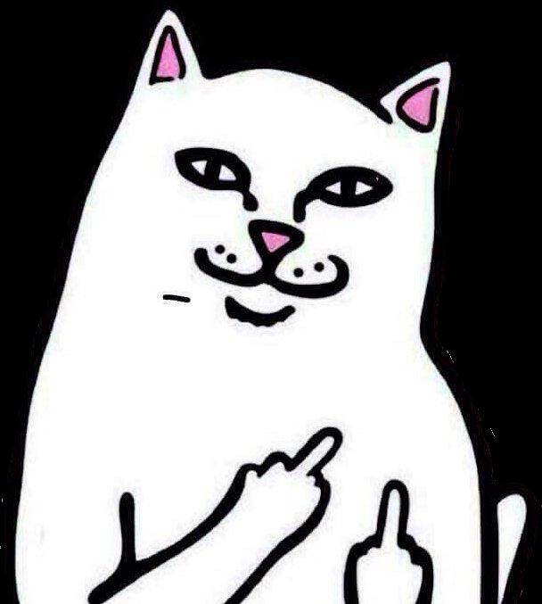 middlefinger cat cats funnycat meme memesfreetoedit