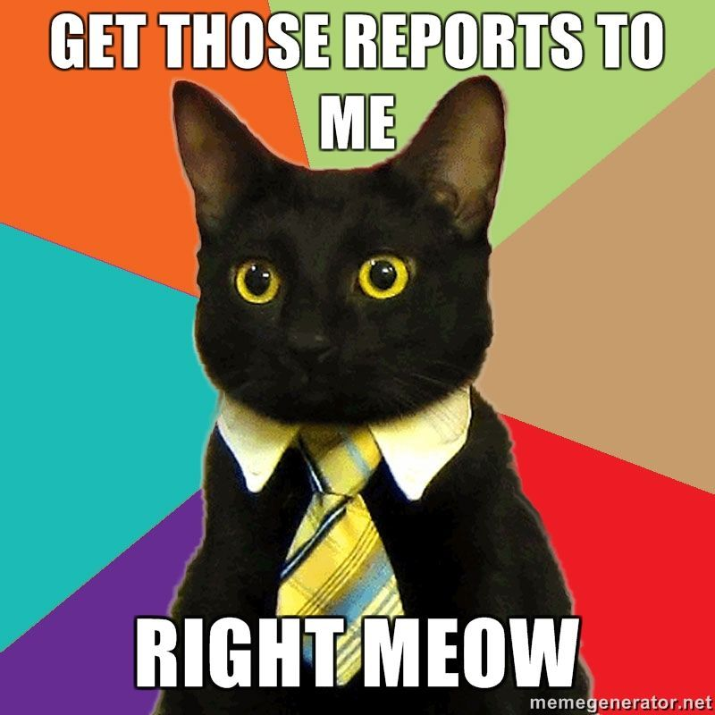 Business cat always makes me smile