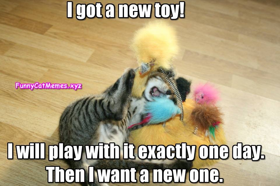kitten with toy Funny Cat Memes