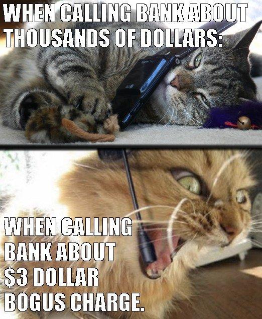 cat explains how phone customer service works
